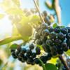 EkoMedica Arónia 100% šťava 500 ml